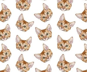cats, patterns, and wallpaper image