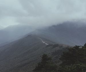 forest, mountain, and hike image