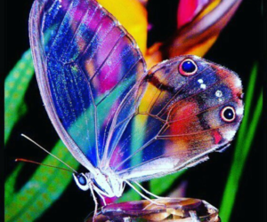 butterfly, glass, and wings image