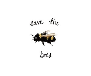 bee, quotes, and nature image