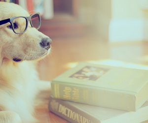 dog, book, and cute image