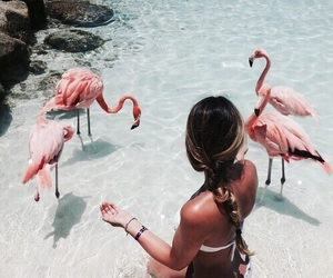 girl, summer, and flamingo image