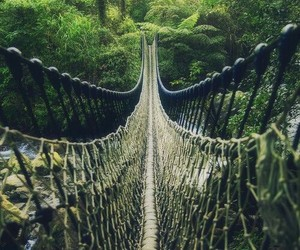 bridge, nature, and adventure image