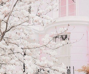 cherry blossoms, pink, and white image