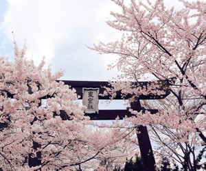cherry blossoms, pink, and flowers image