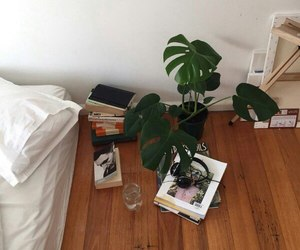 plants, room, and bed image