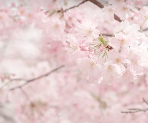 asia, korea, and nature image