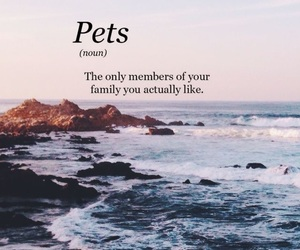 pets, quote, and true image
