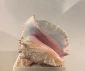 shell, pastel, and pink image