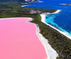pink, nature, and blue image