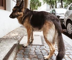 animal, germany, and beauty image
