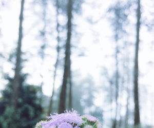 background, flower, and focus image