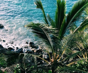 hawaii, palm tree, and Island image