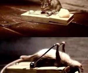 mouse, strong, and funny image