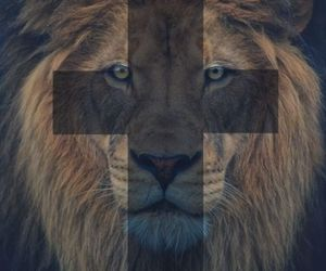 lion, cross, and animal image