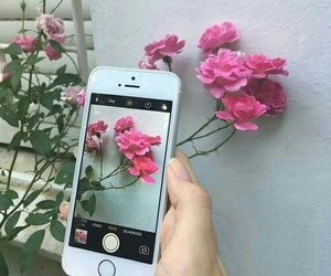 pink, flowers, and alternative image