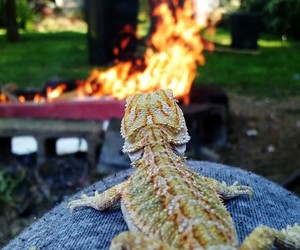 campfire, lizard, and outdoors image