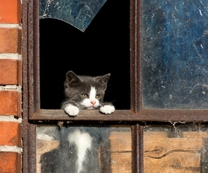 cat, window, and black and white image