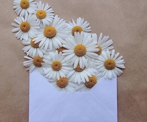 flowers, daisy, and Letter image