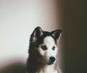 animals, happiness, and dog image