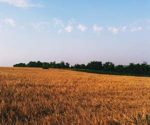 countryside, golden, and nature image