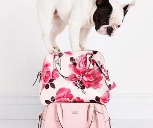 animal, bags, and bag image