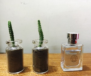 bottle, cactus, and little image