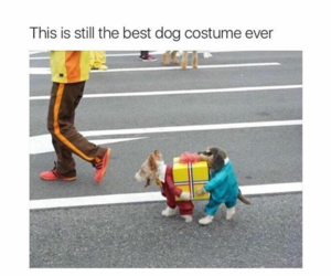 costume, dog, and feed image