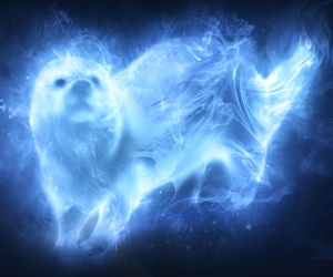 expecto patronum, harry potter, and otter image