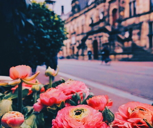 carefree, flowers, and indie image