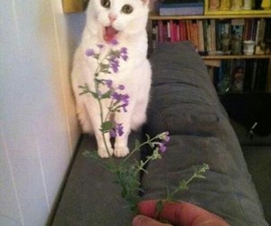 cat, funny, and flowers image