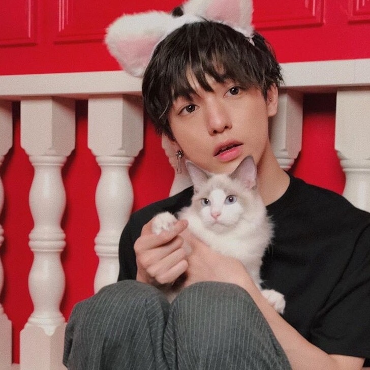 cat, asian, and model image
