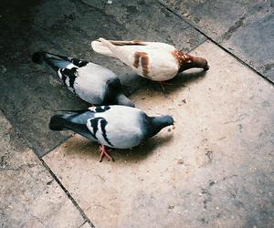 птицы and голуби image