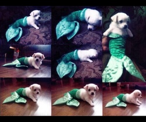 adorable, mermaids, and puppies image