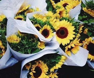 floral, flowers, and yellow image