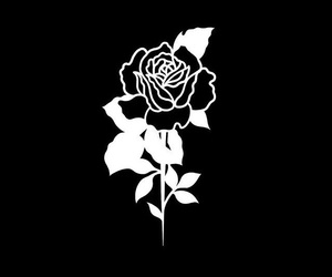 black, rosa, and rose image