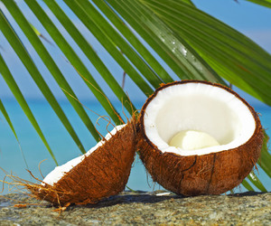 blue, coconut, and coconuts image
