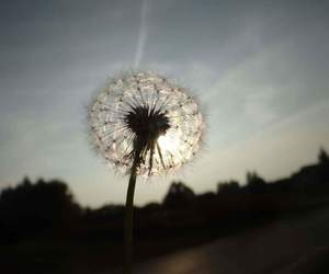 beautiful, colors, and dandelion image