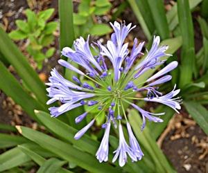 flor, morada, and lila image