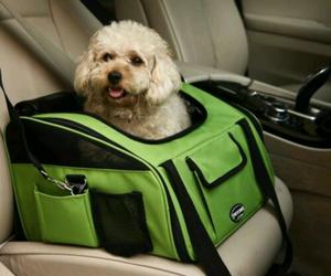 car, dog, and sweet image