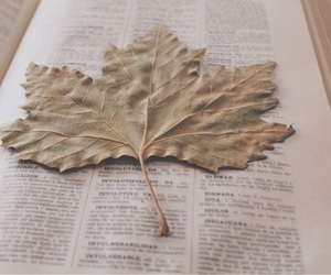leaves, trees, and books image