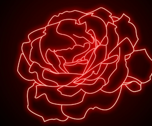 glow, lights, and rose image