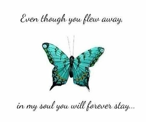 butterflys, poems, and quotes image