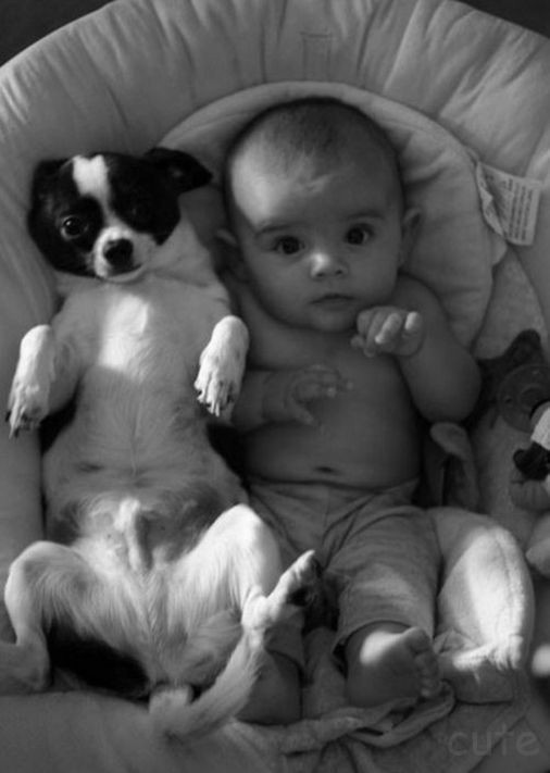 adorable, blackandwhite, and dogs image