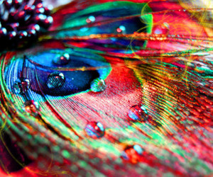 feather, peacock, and colorful image