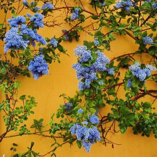 Image About Blue In Wallpaper By Ameliacin On We Heart It