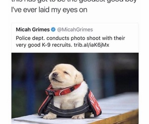 comedy, funny, and puppy image