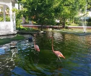 flamingos and paradiese image