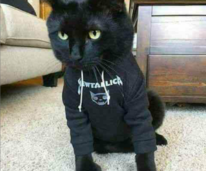 black, cat, and rock image