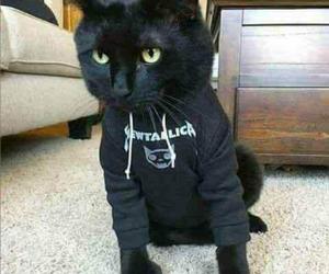 black, metal, and cat image